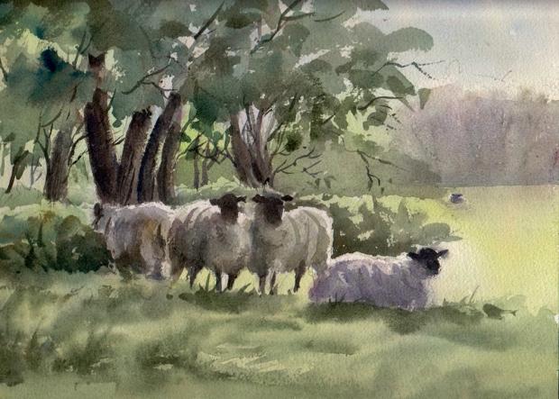 009 - Sheep