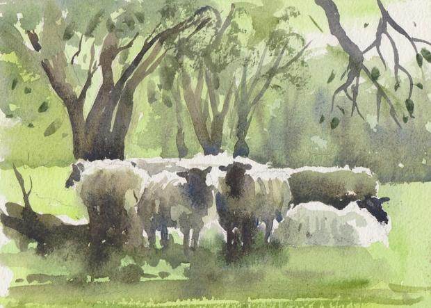 095 - Sheep 2